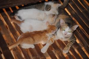 kittens2011